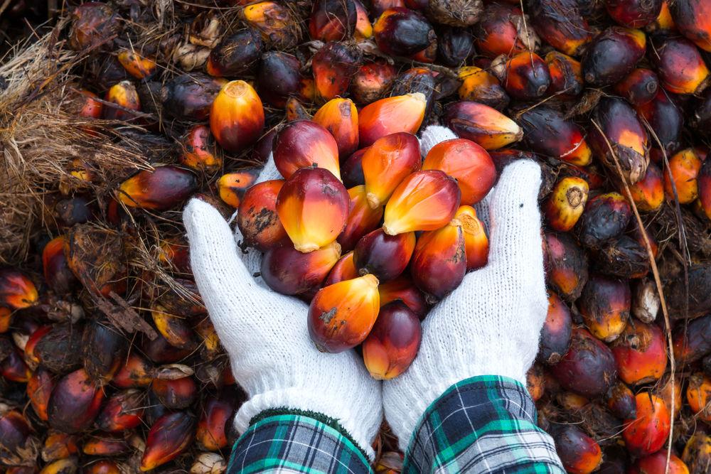 palmový olej EU