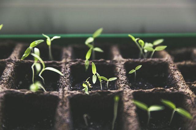 společná zemědělská politika