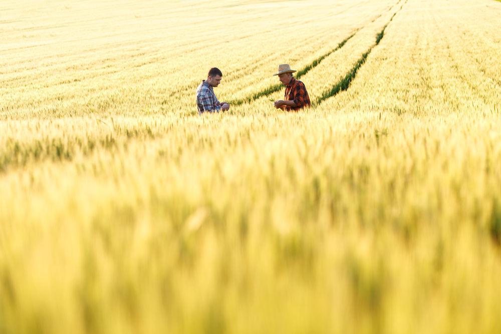 zemědělské dotace